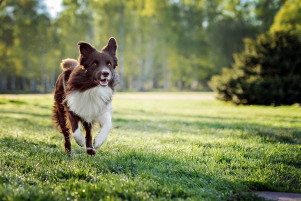 Perro corriendo desatendido en un parque