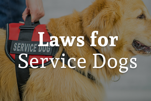 A service dog is supporting its owner with the words, laws for service dogs.